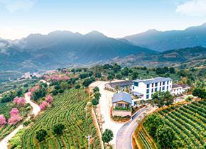 國家級現代化農業產業園——云嶺茶莊園