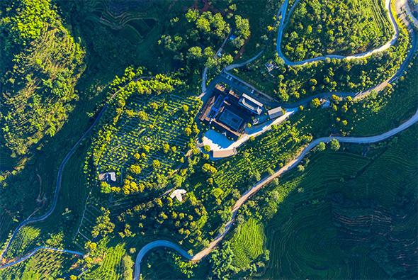 云岭茶庄园俯瞰图
